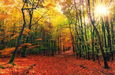 photo forêt automne